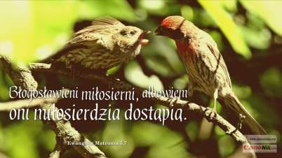 Blogoslawieni_05